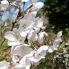 長弓寺の花