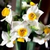 注連縄、花は正月バージョンに…。