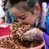 オエーっ!雲南省の麗江(リージャン)で昆虫の大食い大会が開催