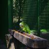 【一日一枚写真】熱帯林のやまびこ達 Part.8【一眼レフ】