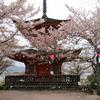 宮島で桜を堪能するならおすすめの場所 ~広島県 安芸の宮島~