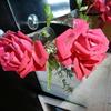 バラのクリスチャンディオールを切り花にして生けた