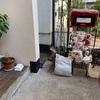 野良猫保護猫親子の家猫修行中。あ~あ、、嫌われた。8月28日。今日は、母猫鈴の一回目のワクチン接種。