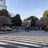 """上野で""""フライングな""""花見をする(2019年3月20日)"""