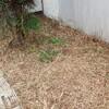 防草シート張り作業