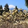 岩殿山に続き富士を眺める二座