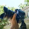 東京湾の無人島「猿島」で、ニコンD810Aを普段使い。撮って出し画像でレビューします。第1回。