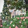 バラとクリスマスツリー