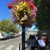花の街ビクトリア前半 ~ エアカナダビジネスとANAファーストで行く特典航空券バンクーバーの旅その8