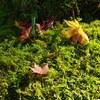 那谷寺「苔と紅葉」