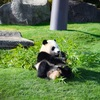 アドベンチャーワールド旅行<パンダに会いに行く2>