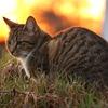 【猫との対話#9】親しい人との関係に違和感を覚えたら。