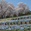 2020.04.04 太田市北部運動公園~壬生公園