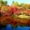 用作公園の紅葉♪
