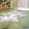 【田上・天神川】地元民が知る「川遊びを楽しみたい」時の無料スポット