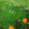 秋晴れ・・・道端の花
