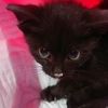 黒子猫を保護しました