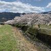 桜がこのタイミング咲く花でよかった。