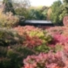 京都行こまい