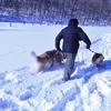 赤城 ふかふかの新雪で犬達と遊ぶ
