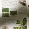 フトアゴさんの飼育日記+与えて良い野菜など