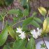 白花のギフト