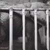 東山動物園 (中編)と俺。空港野宿のせいで初日から疲労MAXの名古屋1人旅(part4)
