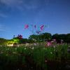 【天体撮影記 第114夜】 長崎県 展海峰のコスモス畑とさよなら夏の天の川
