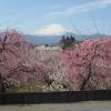 梅、桜、春の花