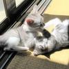 子猫たちの遊び。