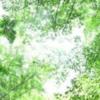 ヒーリングアプリ「Serenite」、パワーサウンド動画3曲追加しました!!
