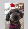 Happy Merry Christmas☆