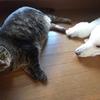 犬猫の友情