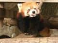 これで無料!?家族もカップルも十分楽しめる無料の夢見ヶ崎動物園と野毛山動物園