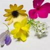 身近に咲いている花をドライフラワーにするぞ!(前編)