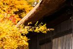 温泉と紅葉を満喫!日本国内の絶景「紅葉露天風呂」を楽しめるホテル・旅館8選