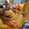 沖縄のトロピカルなマーケット「牧志第一公設市場」と珍百景なドミトリーを徹底取材!
