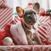 クリスマスプレゼントを買いに