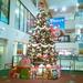 SUNAMOクリスマスツリー点灯式キッズ聖歌隊メンバー募集!