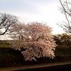 【大型割引特典付き】春の応募型キャンペーン開催!