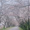 三重のお散歩〜安濃川沿いの北神山の桜🌸