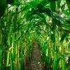 国内有機農産物の畑の割合が0.2%なんて信じられない