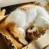 愛猫の日向ぼっこ姿は、飼い主の心もぽかぽかにしてくれます。