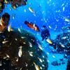 ♪やっぱり那覇から日帰り慶良間へファンダイビング♪〜沖縄ダイビング那覇PADI少人数〜