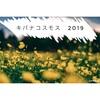 【ビタミンカラー】昭和記念公園のキバナコスモスを撮ってきた