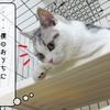 猫の道具 ~むくのケージ~