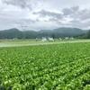 野菜の村にある資料館! 長野県朝日村(124/1741)