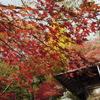 11月の雪景色 丹沢大山界隈