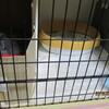 子猫達、産箱から脱出