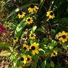 タカオのいる秋の庭